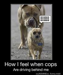 Dog Driving Meme - how i feel when cops are driving behind me funny dog picture