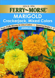 Marigolds Shade by Amazon Com Ferry Morse Marigold Crackerjack Mixed Colors Seeds