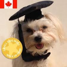 dog graduation cap and gown pet graduation cap and gown dog cap and dog graduation gown