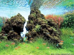 amano aquascape l aquascaping d礬finition et explications