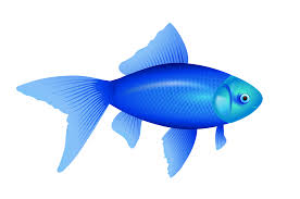 blue cartoon fish 4239079 1969x1307 all for desktop