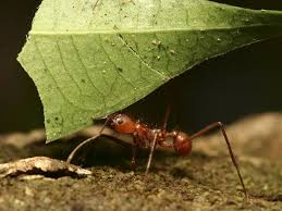Ants In Bathtub How Do Ants Walk Ina Straight Line