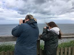 Home Design Y8 Bird Watching At Bempton For Y8 Fyling Hall