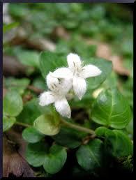 illinois native plants illinois botanizer little grand canyon ecological area jackson