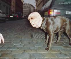 Scary Halloween Costumes Boo Wow 10 Freakiest Scariest Halloween Dog Costumes
