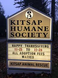 adopt a family for thanksgiving kitsap humane society 195 pets adopted in just 4 days
