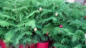 christmas trees home depot christmas lights decoration