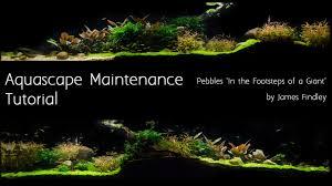 Aquascape Com Aquascape Maintenance Tutorial Guide The Green Machine Youtube