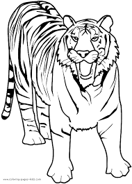 Growling Tiger Color Page Coloring Pages Tiger
