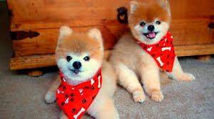 Cute Dogs Wallpapers by Cute Dogs Images Collection 52