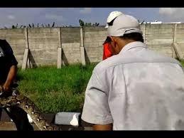 film ular phyton pemburu ular phyton pt surteckariya indonesia youtube