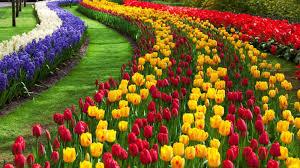 Botanic Gardens Hobart Index Of Images 10 Spots To Visit On You Hobart Adventure