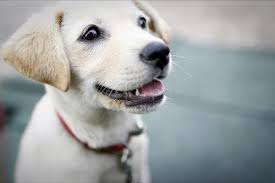 cute dog wallpapers cute dogs wallpapers apk download free lifestyle app for android
