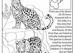 earth day worksheets u0026 free printables education com