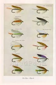 Hunting And Fishing Home Decor Vintage Print Trout Fishing Flies Art Illustration By Agedpage