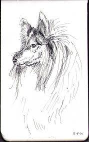 sketch of a shetland sheepdog called dakota in ballpoint pen one