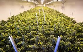 illinois grow revolution high times