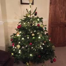cut to order premium quality fresh christmas trees really green