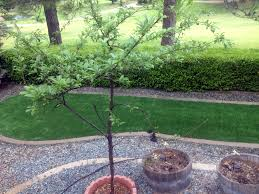artificial turf installation lakeside green florida landscaping