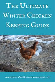 the ultimate winter chicken keeping guide keeping chickens