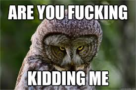 Are You Fucking Kidding Me Meme - are you fucking kidding me unimpressed owl quickmeme