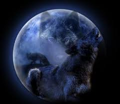 the anubian s wolf pack images wolves in the moon wallpaper and