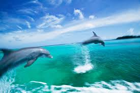 mystery solved how do dolphins swim so fast