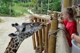 Botanical Garden Cincinnati Cincinnati Zoo Botanical Garden Uptown Cincinnati Animal