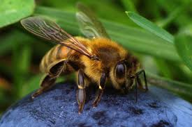 free images nature flower fly wildlife fauna invertebrate