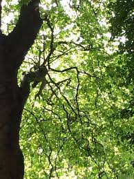 awesome trees picture of st stephen s green dublin tripadvisor