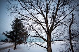 file tree in winter on the oak ridges moraine jpg wikimedia commons
