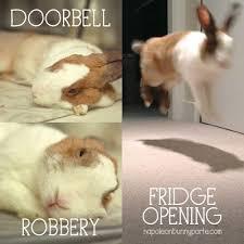 Funny Rabbit Memes - rabbit ramblings funny bunny memes animals pinterest funny