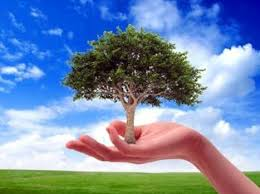 why do we celebrate world environment day why dowhy do