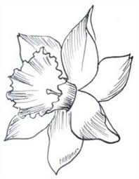 daffodil outline group 59