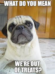 Funny Pug Memes - 8 funny pug memes what every dog deserves