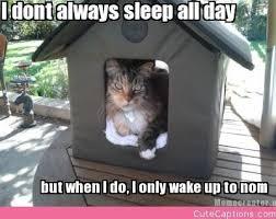 Sleeping Cat Meme - wednesday 28 02 2018 public sleeping day zzzzzzz the daily