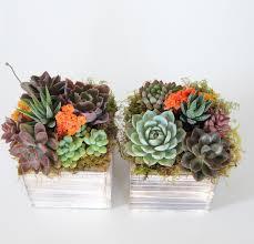 succulent arrangements succulent arrangement 4426 e1501013275416 jpg