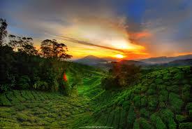 cameron highlands the land of serenity u2013 azimthetraveler