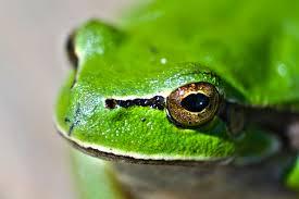 free stock photos of kermit the frog pexels