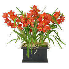 orchid plants 31 in cymbidium orchid plants in rectangular planter orange