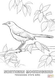 tennessee state bird coloring page free printable coloring pages