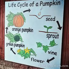 Pumpkin Patch Louisburg Nc by 17 Melhores Ideias Sobre Kc Pumpkin Patch No Pinterest Jogos Do