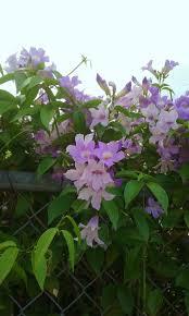 119 best jamaican flora minus the fauna images on pinterest