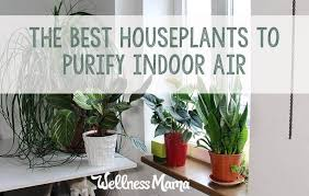 best indoor house plants the best houseplants for purifying indoor air that are pretty too