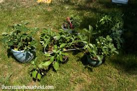 planning and preparing our vegetable garden part 3