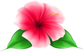 flower clip flower png clip image gallery yopriceville high