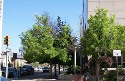 commercial tree trim a family tree service