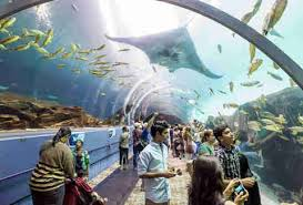 Georgia Aquarium Floor Plan Things To Do In Atlanta Ga An Atl Bucket List Thrillist