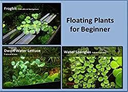 12 Best Plants That Can by Best Floating Aquarium Plants Top 6 Reviews Aquascape Addiction