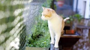 balkon katzensicher machen balkon für die geliebte katze schöner sicherer gestalten